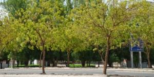 664xauto-kisah-pohon-soekarno-tempat-berteduh-jemaah-haji-di-arafah-150922p