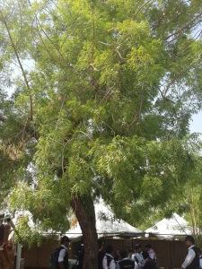 petugas haji berteduh di bawah pohon soekarno