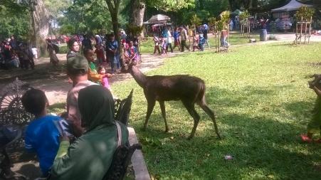 Rusa di antara pengunjung